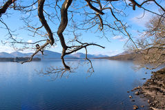 Branches over Loch Lomond Royalty Free Stock Photography