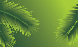 Branches of palm. Abstract background Stock Photos