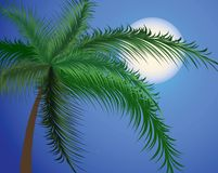 Branches of a palm tree against the moon Royalty Free Stock Images