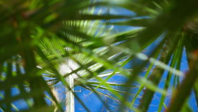 The branches of a palm tree swaying in the wind. The branches of a palm tree against the sky, swaying in the wind stock footage