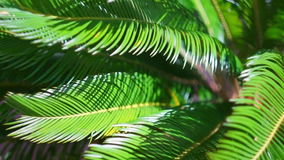 The branches of a palm tree swaying in the wind stock video footage