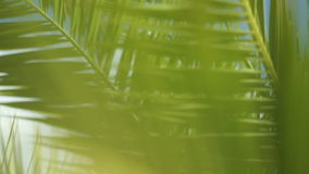 The branches of a palm tree swaying in the wind stock video