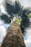 Branches of palm tree Stock Photography