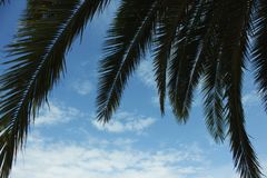 Branches of palm trees against the blue sky. Green branches of palm trees against the blue sky Stock Image