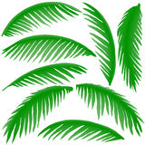 Branches of palm trees Royalty Free Stock Photography