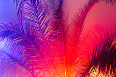 The branches of a palm trees in night illumination Royalty Free Stock Images