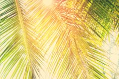 Branches of palm trees with Retro Filtered Royalty Free Stock Image