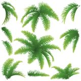 Branches of palm trees Royalty Free Stock Image