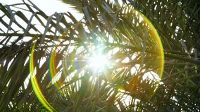Through the branches of the palm trees sunlight breaks through, sunbeams, rays. close-up, bottom view.  stock footage