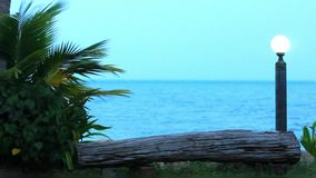 Branches of palm trees sway in the breeze on stock video footage