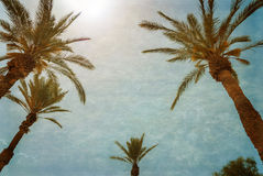 Branches of palms under blue sky Royalty Free Stock Images