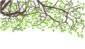 Branches pattern Royalty Free Stock Image