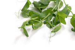 Branches of pea Stock Photo