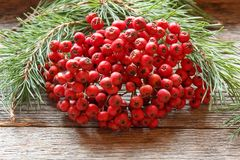 Branches of pine and a bunch of red Rowan on wooden background. Stock Photo
