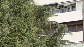 The branches of the pine tree move from the strong wind. With the windows of the building in the background stock footage