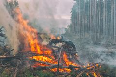Fire in the Pine Forest Stock Photo