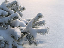 Branches of pine under a snow Stock Photos