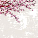 Branches with pink flowers on vintage background old wall. Royalty Free Stock Photography