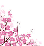 Branches with Pink Flowers  on White Royalty Free Stock Photos