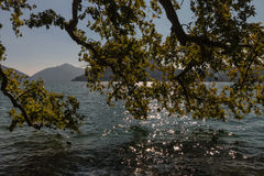 Branches of plane tree reaching to lake Maggiore Stock Photography