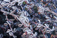 Branches plants covered with hoarfrost. Nature background Royalty Free Stock Photos