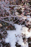 Branches plants covered with ice. Nature background Royalty Free Stock Photo