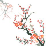 Branches of plum tree in bloom. Isolated on white background Stock Image