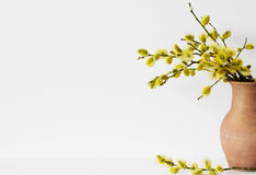 Branches of the willow with flowering bud Royalty Free Stock Photo