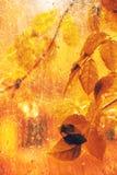 Branches on rainy window pane Stock Photo