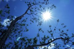 Branches Reaching Towards the Sun Stock Images