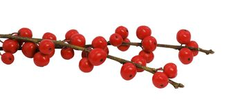Branches with red berries Stock Photos