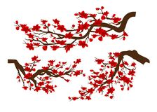 Branches of red blossoming sakura . Japanese cherry tree isolated white background. Chinese new year.  Royalty Free Stock Photography