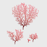 Branches of red coral, stylish  image Stock Photography
