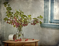 Branches of red currant. Still life from the branches of red currant Royalty Free Stock Photo