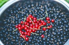 Branches of red currant and black currant in the bowl. Organic and fresh berries. Raw and fresh fruit. Concept of healthy food wit Stock Photos