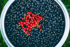 Branches of red currant and black currant in the bowl. Organic and fresh berries. Raw and fresh fruit. Concept of healthy food wit Stock Photo