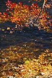 Branches of red foliage hang over the Farmington River, Connecticut. royalty free stock photography