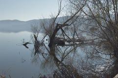Branches reflétées Photographie stock
