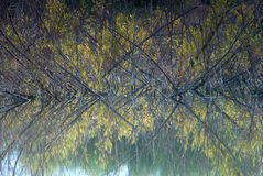 Branches reflecting in the water. Abstract scene Royalty Free Stock Photography