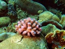 Branches of rigid corals, Vietnam, Nha Trang Royalty Free Stock Photos