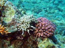 Branches of rigid corals, Vietnam, Nha Trang Stock Photo