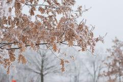 branches rimfrosten Arkivfoto