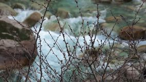 Branches On The River stock video footage