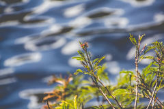 Branches by the river. An image of branches by the water Royalty Free Stock Image