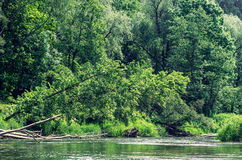 Branches in the river Royalty Free Stock Image