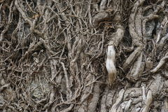 Branches or roots. Natural pattern Stock Images
