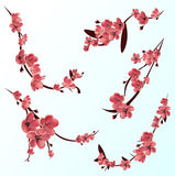 Branches of rose blossoming sakura . Japanese cherry tree. Vector Isolated icon Set Stock Photography
