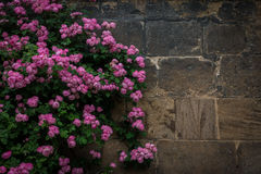 The branches of rosebush against a stone wall Stock Image
