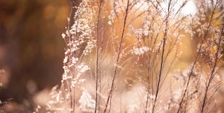 Branches roses sous le soleil Photos stock