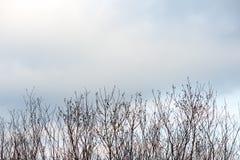Branches sèches artistiques sur le fond blanc images libres de droits